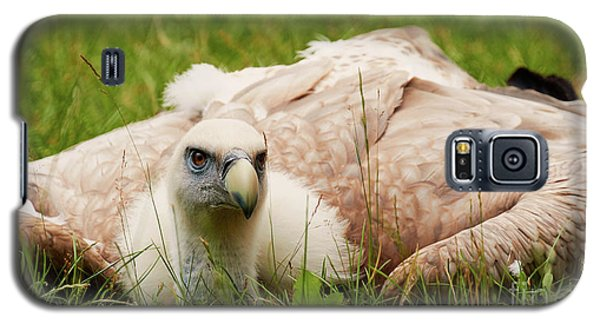 Galaxy S5 Case featuring the photograph Griffon Vulture by Nick Biemans