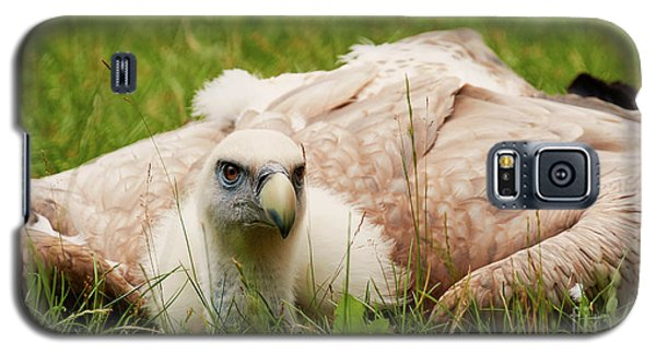 Griffon Vulture Galaxy S5 Case
