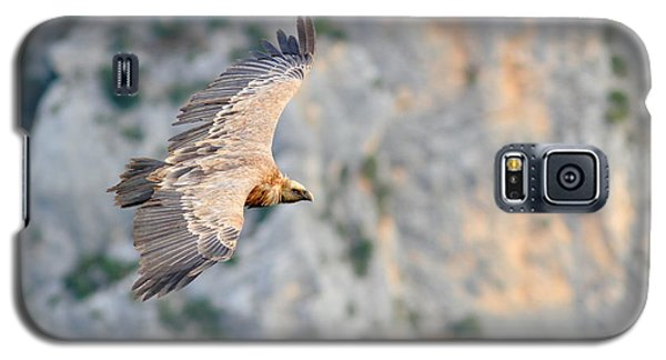 Griffon Vulture Galaxy S5 Case by Richard Patmore