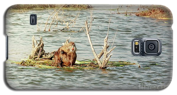 Galaxy S5 Case featuring the photograph Grinning Nutria On Reeds by Robert Frederick