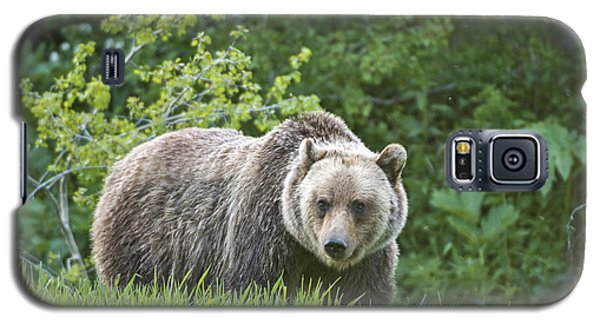 Galaxy S5 Case featuring the photograph Grizzly Bear by Gary Lengyel