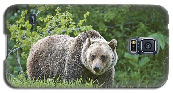 Grizzly Bear Galaxy S5 Case by Gary Lengyel