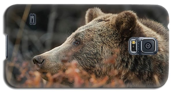 Grizzly Bear Portrait In Fall Galaxy S5 Case
