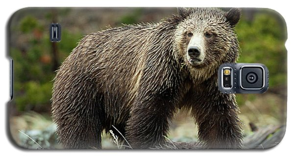 Grizzly Bear Galaxy S5 Case