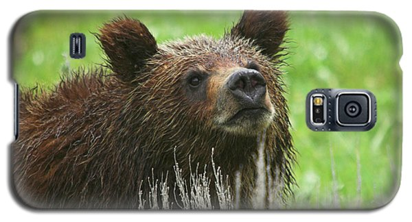 Galaxy S5 Case featuring the photograph Grizzly Cub by Steve Stuller