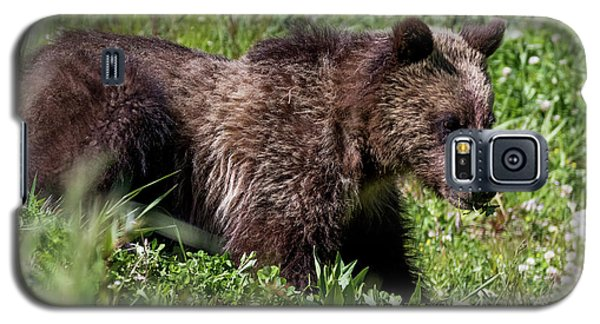 Grizzly Cub  Galaxy S5 Case