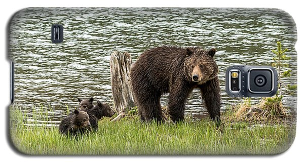 Galaxy S5 Case featuring the photograph Grizzly Mom And Cubs by Yeates Photography