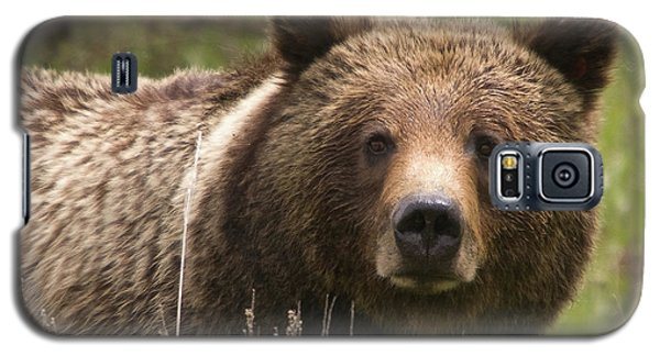 Grizzly Portrait Galaxy S5 Case by Steve Stuller