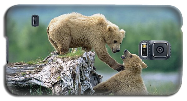 Brown Bear Galaxy S5 Case - Grizzly Sisters Playing by Yva Momatiuk John Eastcott