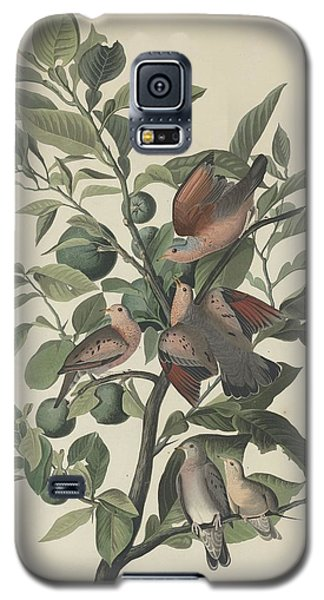 Ground Dove Galaxy S5 Case by Anton Oreshkin