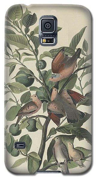 Ground Dove Galaxy S5 Case