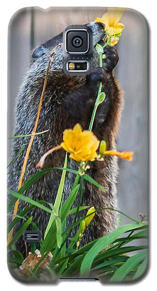 Groundhog And Flowers Galaxy S5 Case