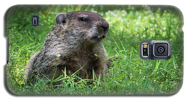 Groundhog Posing  Galaxy S5 Case