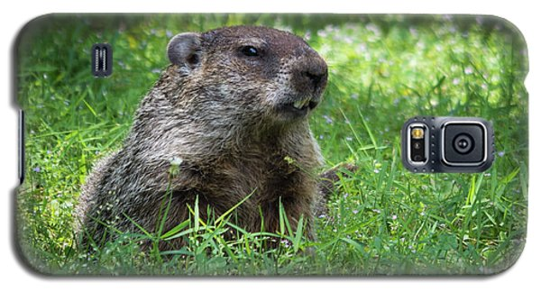 Groundhog Posing  Galaxy S5 Case