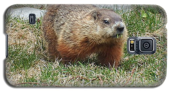 Galaxy S5 Case featuring the photograph Groundhog by Vicky Tarcau