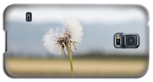 Groundsel In The Wind Galaxy S5 Case by Yoel Koskas