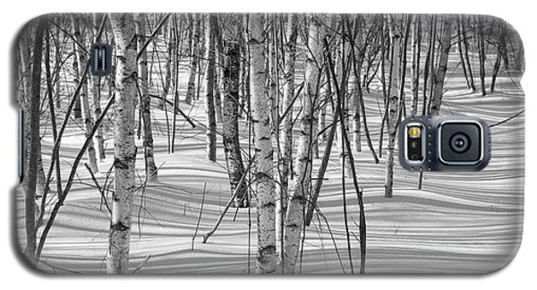 Group Of White Birches Galaxy S5 Case