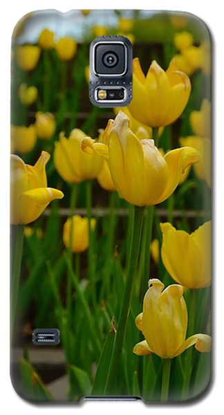 Grouping Of Yellow Tulips Galaxy S5 Case