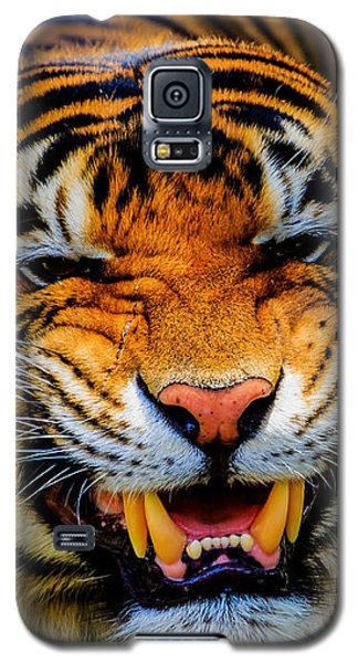 Growling Tiger Galaxy S5 Case
