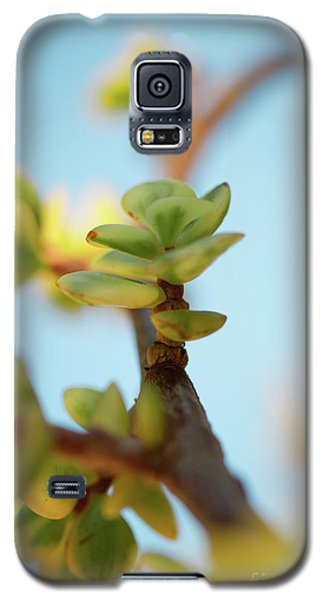 Galaxy S5 Case featuring the photograph Growth by Ana V Ramirez