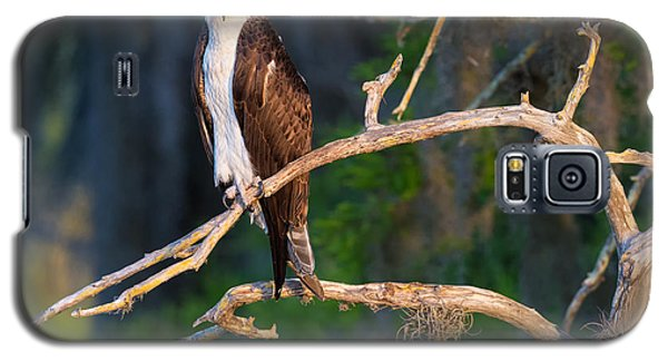 Grumpy Osprey Not Ready For Its Picture Galaxy S5 Case