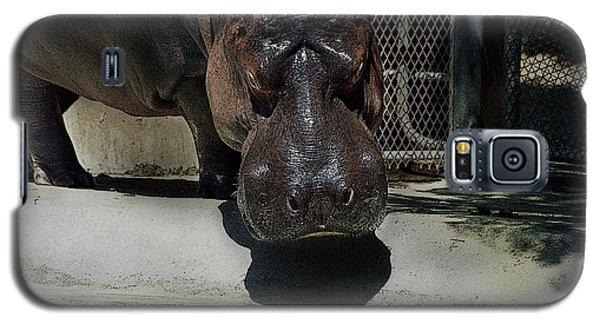 Grumpy Rhino Galaxy S5 Case