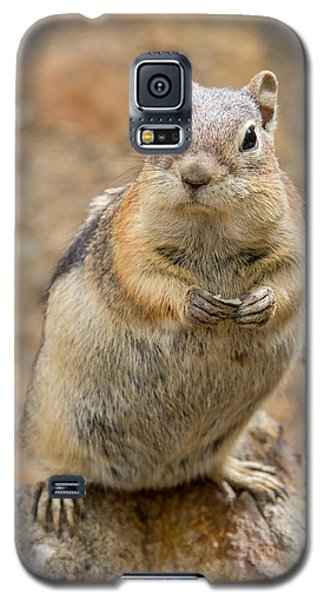 Grumpy Squirrel Galaxy S5 Case