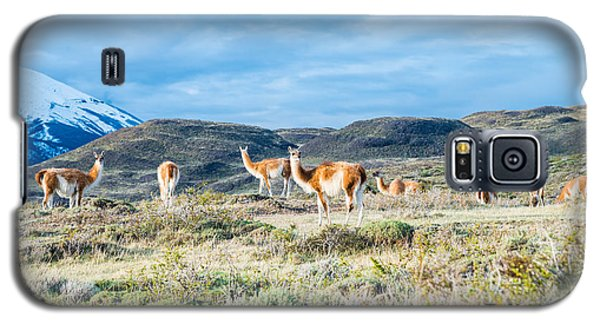 Guanaco In Patagonia Galaxy S5 Case