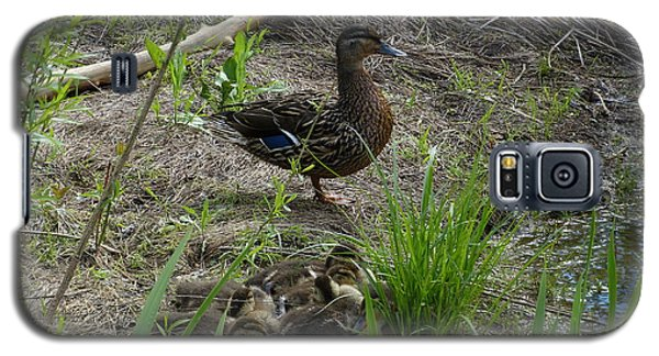 Galaxy S5 Case featuring the photograph Guarding The Ducklings by Donald C Morgan