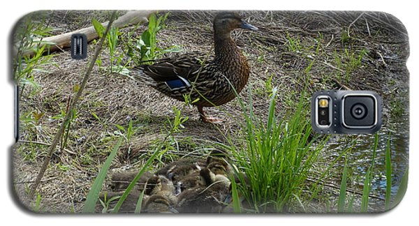 Guarding The Ducklings Galaxy S5 Case by Donald C Morgan