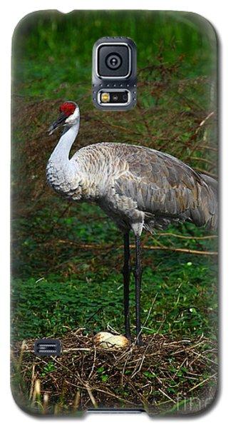 Guarding The Nest Galaxy S5 Case