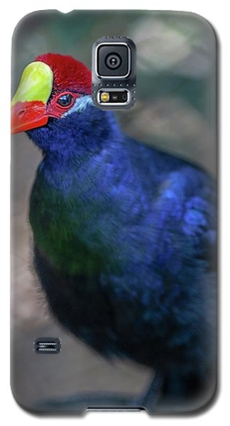 Guinea Hen Galaxy S5 Case