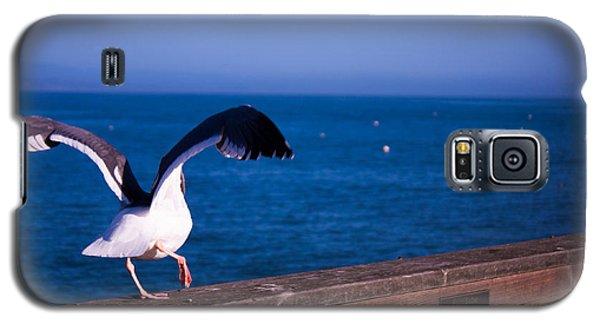 Gull Dance Galaxy S5 Case