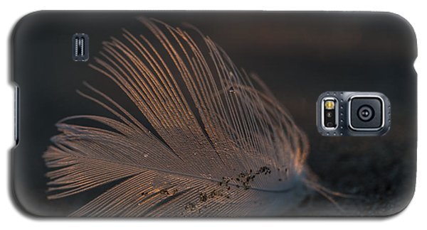 Gull Feather On A Beach Galaxy S5 Case