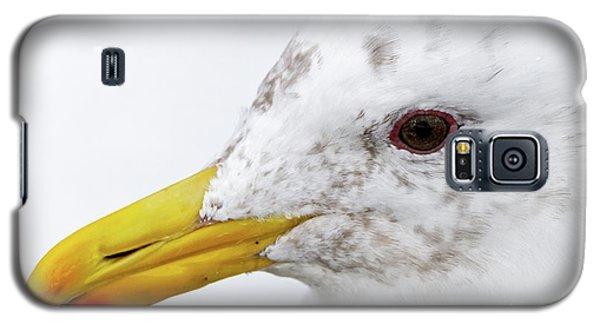 Gull Portrait Galaxy S5 Case