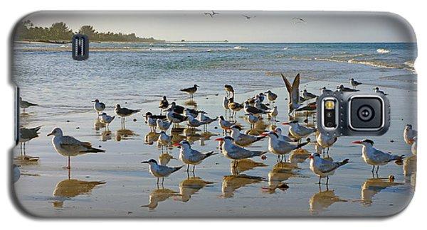 Gulls And Terns On The Sanbar At Lowdermilk Park Beach Galaxy S5 Case