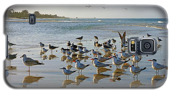 Gulls And Terns On The Sanbar At Lowdermilk Park Beach Galaxy S5 Case