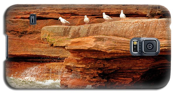 Gulls On Outcropping Galaxy S5 Case