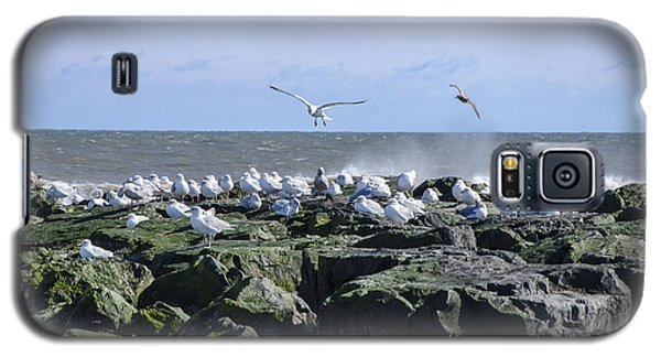 Gulls On Rock Jetty Galaxy S5 Case