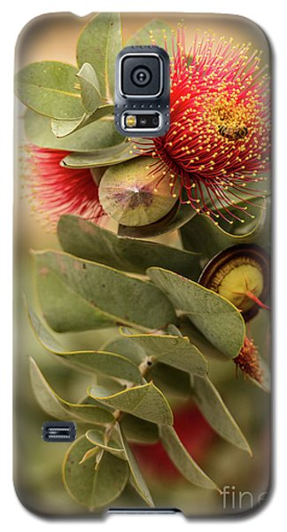 Galaxy S5 Case featuring the photograph Gum Nuts by Werner Padarin
