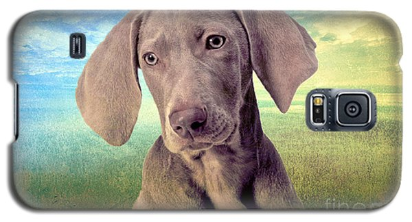 Gunshy Weimaraner Looking For Loving Home Galaxy S5 Case