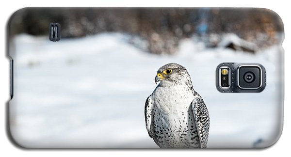 Gyrfalcon Galaxy S5 Case