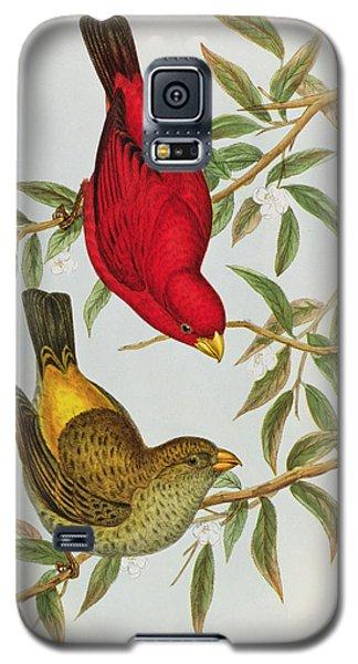 Haematospiza Sipahi Galaxy S5 Case