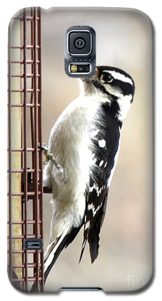 Hairy Woodpecker Galaxy S5 Case