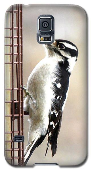 Hairy Woodpecker Galaxy S5 Case