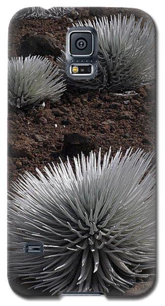 Haleakala Silverswords Galaxy S5 Case