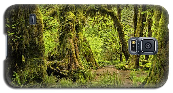 Hall Of Mosses - Olympic National Park Galaxy S5 Case