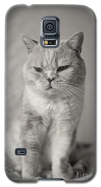 Galaxy S5 Case featuring the photograph Handsome Cat by Aiolos Greek Collections