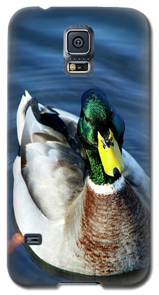 Handsome Male Mallard Galaxy S5 Case