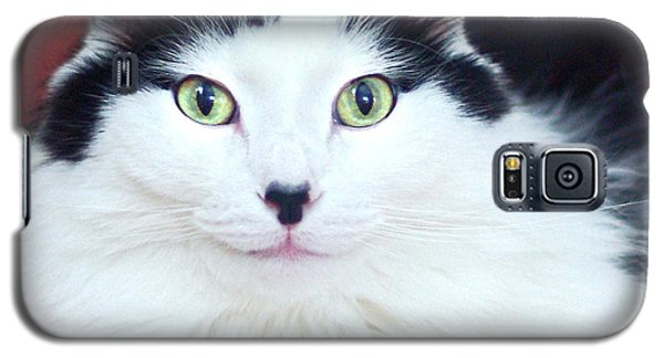 Galaxy S5 Case featuring the photograph Handsome Tuxy by Byron Varvarigos
